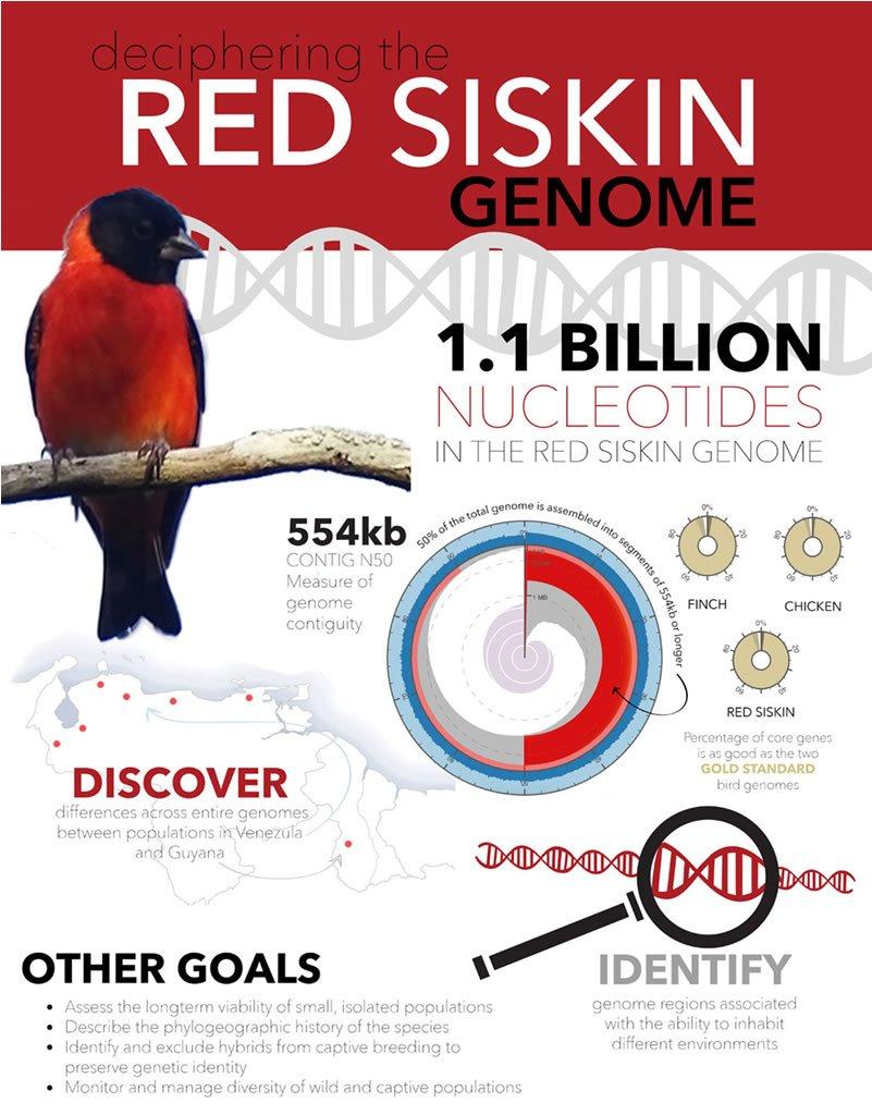 Advances in Red Siskin genetics research