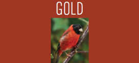 Saving Red Gold on ABC Magazine