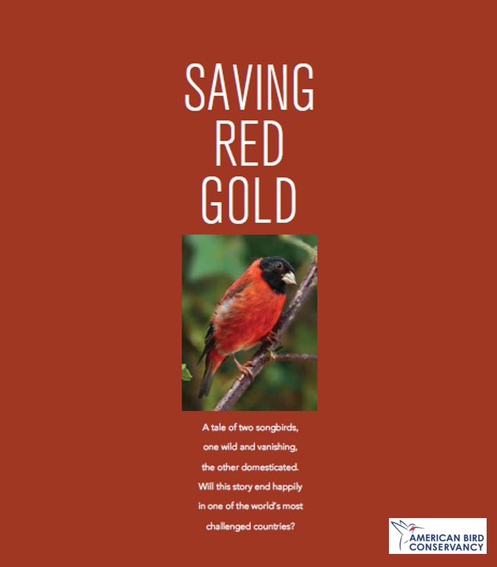 Saving Red Gold on ABC Magazine
