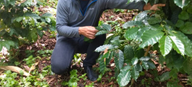 Inspiring others to adopt good agroforestry practices: thank you ABC!