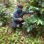 Inspirando a otros a adoptar buenas prácticas agroforestales: gracias ABC!